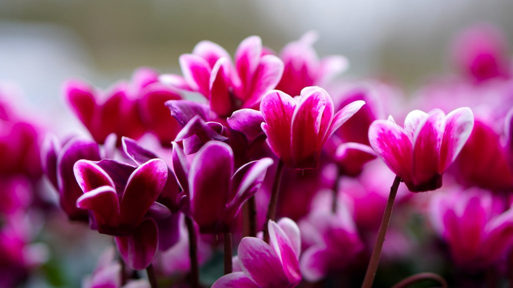 fioriere